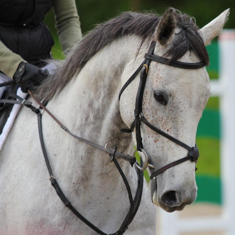 HorseDev_2